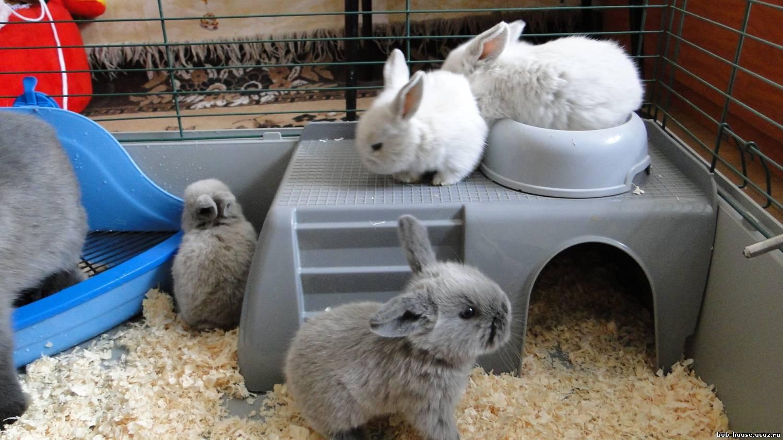 Клетки кролики декоративные в домашних условиях